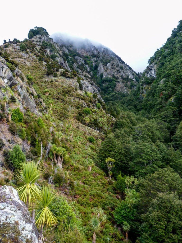Ausblick auf bewaldete Schluchten